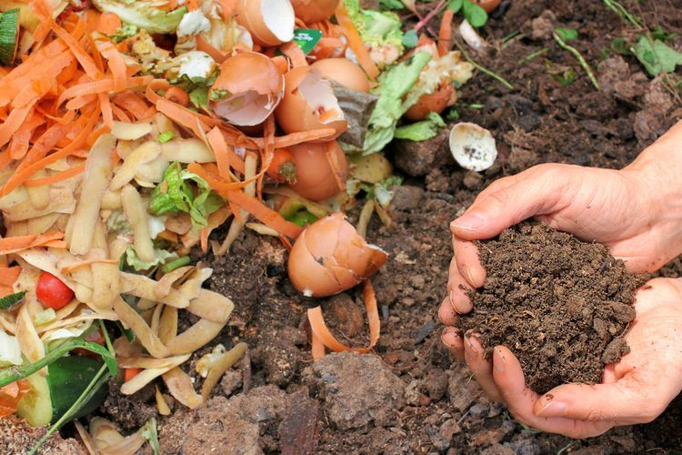 Ilustrasi limbah dapur. | Sumber: Shutterstock via: Kompas.com