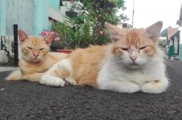 Berkat organ khusus yang mengandung neuron sensorik, kucing bisa menemukan jalan pulang meski sudah dibuang ke tempat lain (dok.pri)