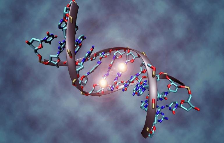 Ilustrasi rantai DNA: harvard.edu