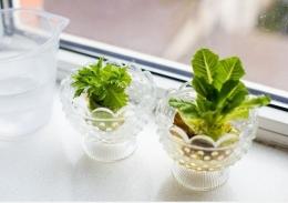 Menanam kembali bonggol sayuran | foto: brigitte.de/Daria Minaeva/Shutterstock