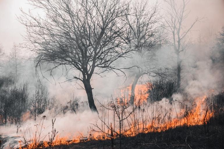 ilustrasi kebakaran hutan | photo by Vladyslav Dukhin from pexels