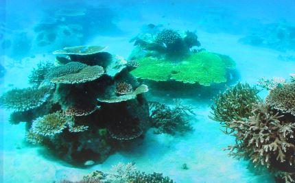 Batu Hijau - Reefball