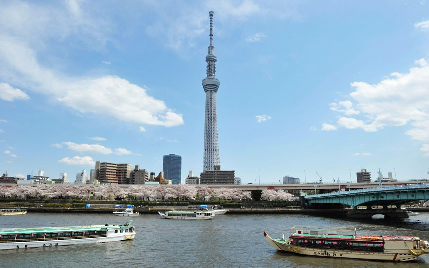 The Tokyo Sky Tree is seen above cherry blossoms in full bloom at Sumida Park
