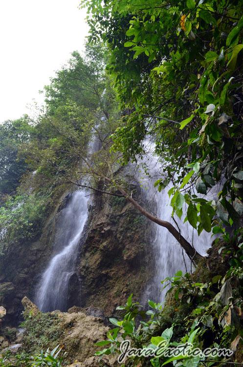 foto: http://javaexotic.com/