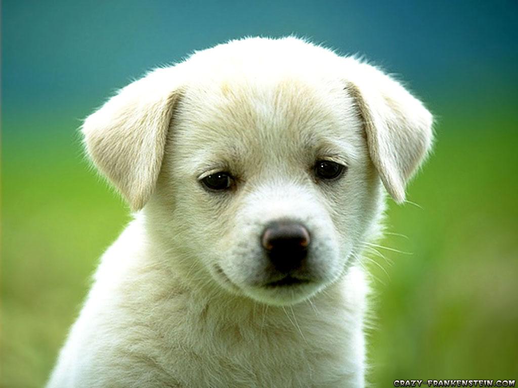 http://2.bp.blogspot.com/_f9N24be5TLI/TJhO3EyDBVI/AAAAAAAAAIA/JezF-uVLN5k/s1600/cute-puppy-dog-wallpapers.jpg