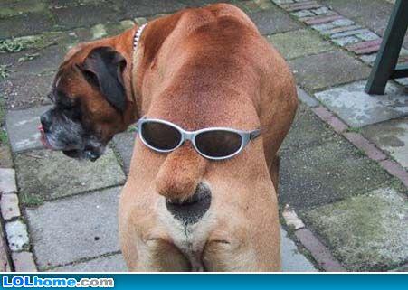 http://www.gambarhumor.com/wp-content/uploads/2010/01/anjing-bermuka-2.jpg