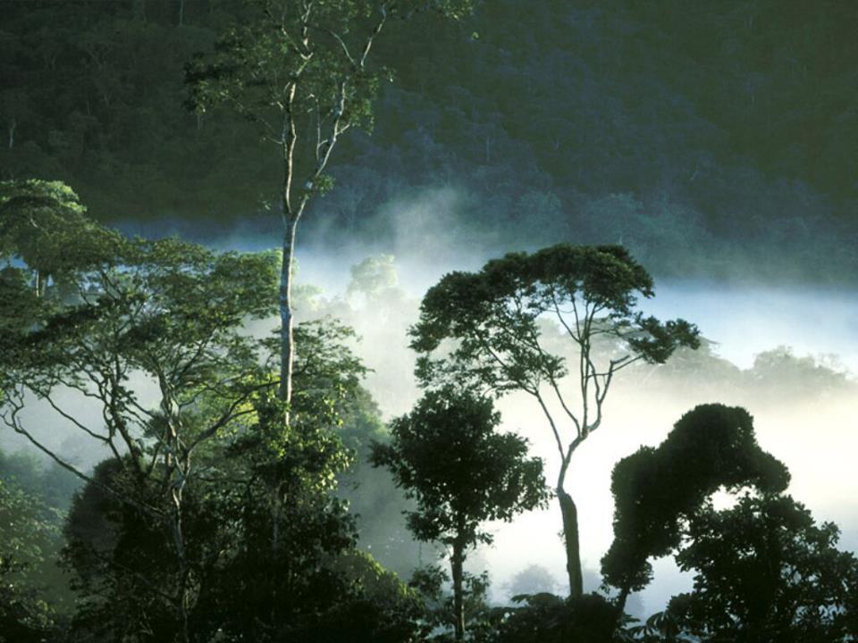Konservasi Sumber Daya Hutan dan Ekosistemnya - KOMPASIANA.com