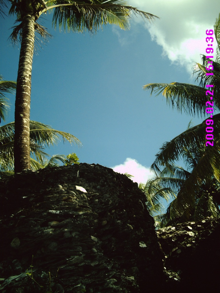 Pohon kelapa yang tumbuh di atas bukit sampah dapur
