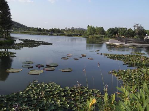 Landscape di tema tanaman air ini