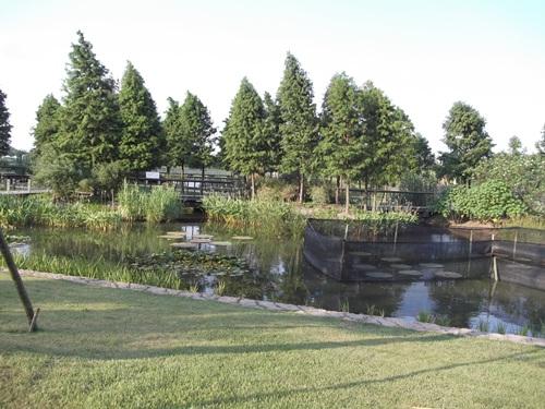 Ini juga landscape di sekitar area tema tanaman air