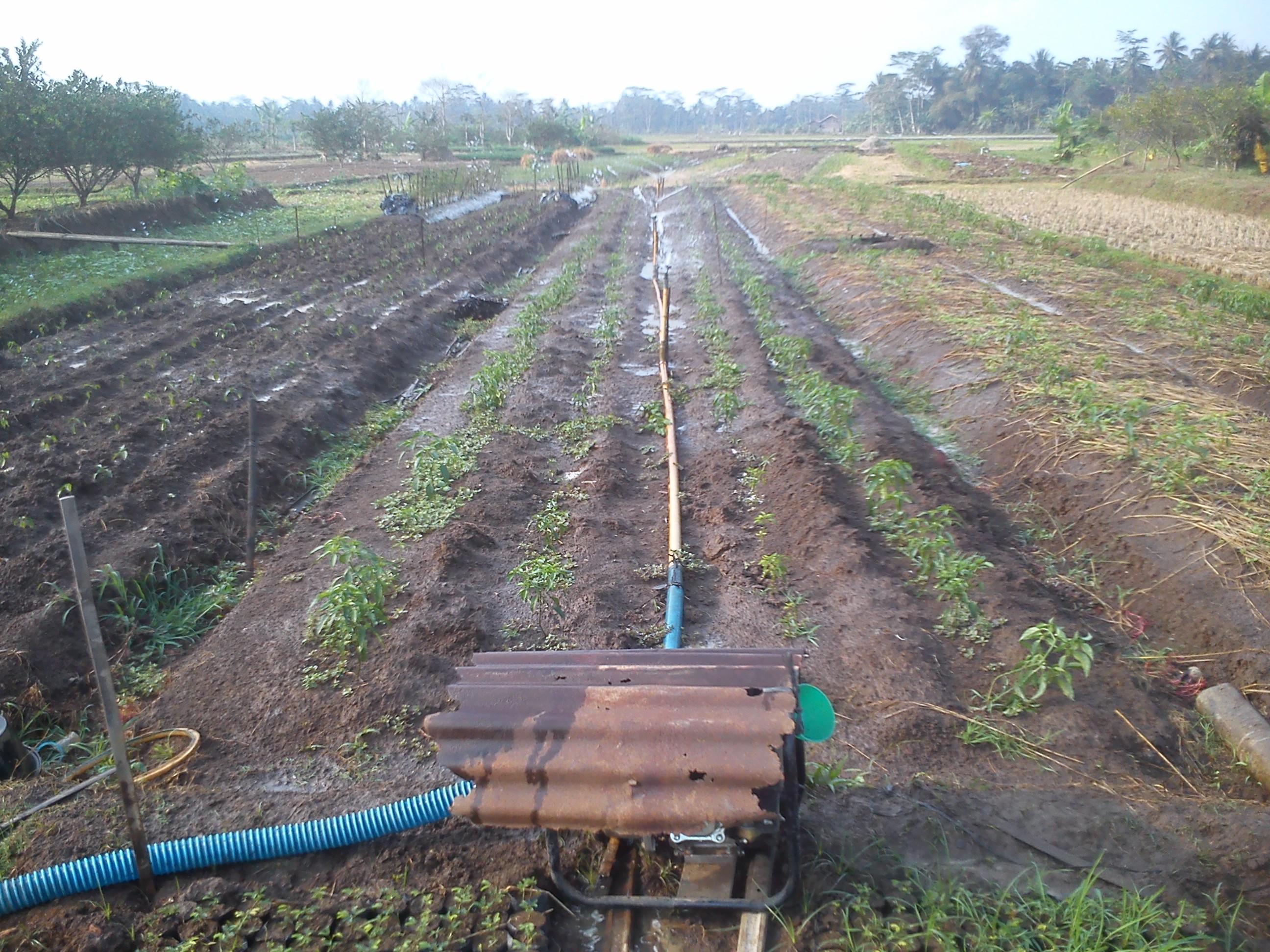 Di Desaku Ada Teknologi Pertanian A La Amerika Oleh Husni Mubarok