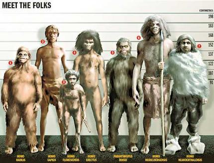 Perbandingan ukuran tubuh manusia kerdil Flores (homo Floresiensis) dengan spesies lainnya. Sumber: sososciencedotcom1.files.wordpress.com