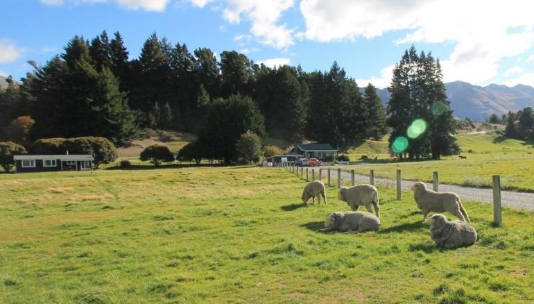 Mengintip Kehidupan Peternakan di New Zealand Halaman all - Kompasiana.com