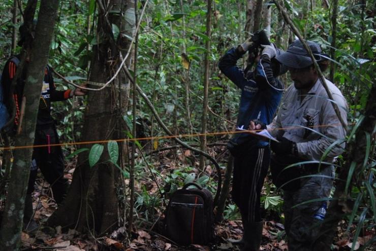 Tim dari Yayasan Palung saat melakukan survei. Foto dok. Edward Tang dan Yayasan Palung