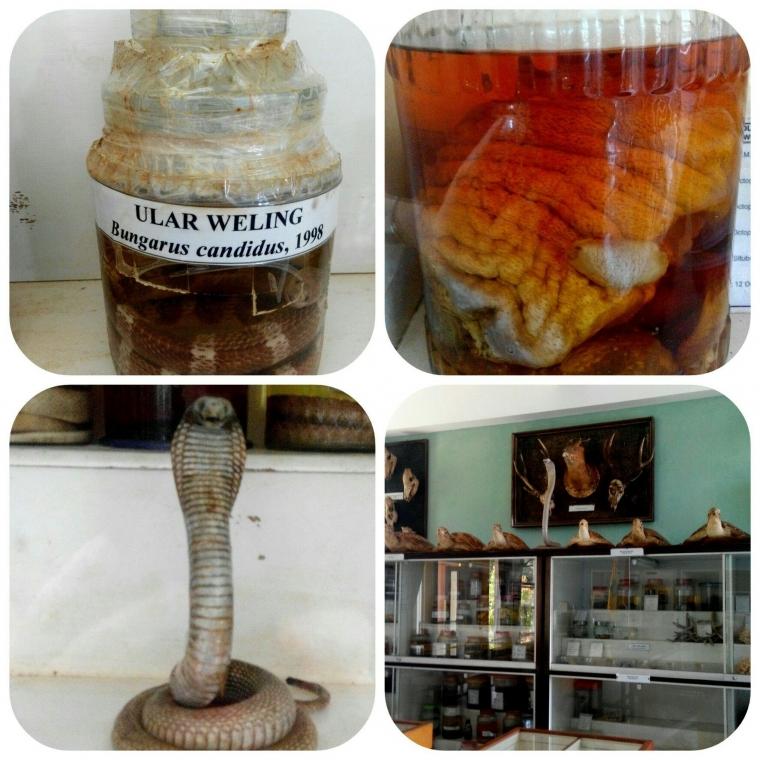 Fakta Menarik Berdirinya Museum Zoologi Frater Vianney Malang Halaman All Kompasiana Com