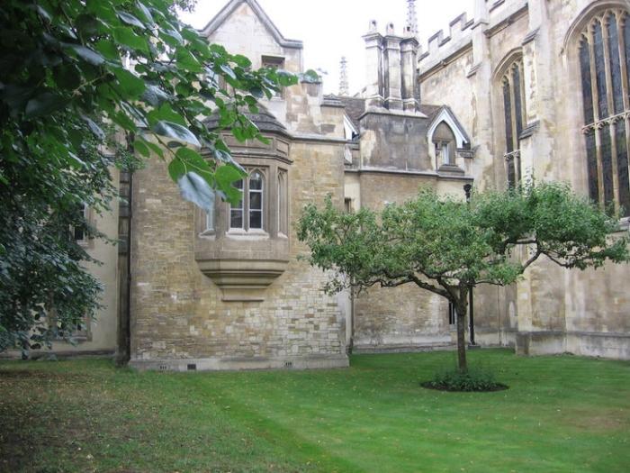 Pohon Apel Newton Masih Berdiri Kokoh di Tempatnya