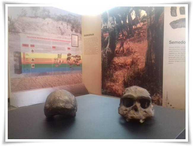 Tengkorak manusia purba yang berusia ribuan tahun (Dokpri)