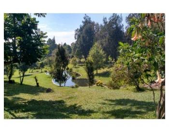 Wisata Kebun Raya Cibodas Dan Masjid Atta Awun Kompasiana Com