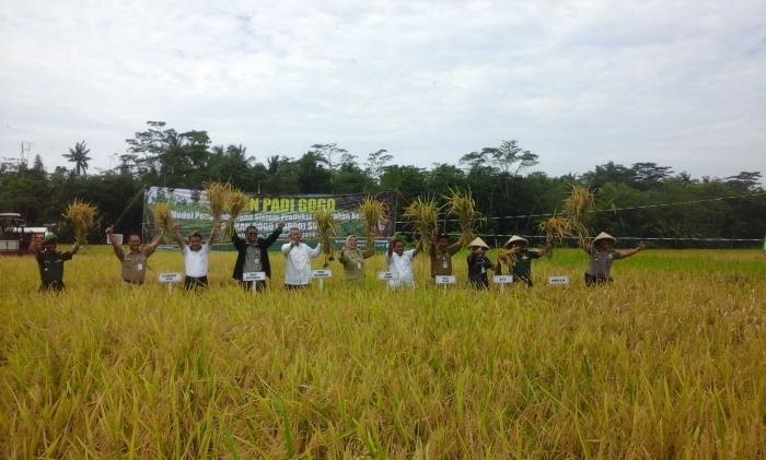 Suasana panen padi gogo di Desa Banjareja, Kecamatan Cipuring, Kebumen. Foto Setiyo