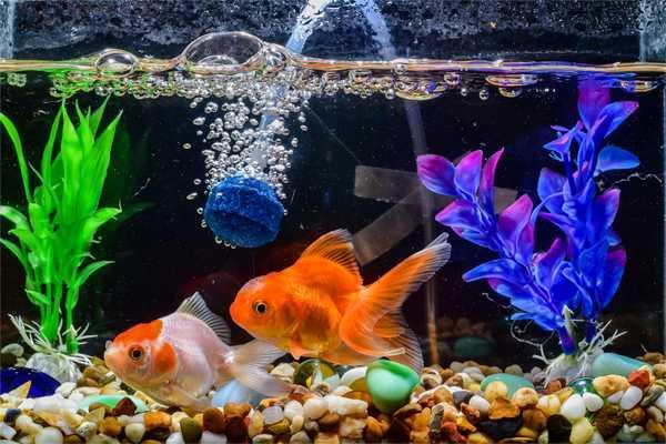 Foto Artikel : Hilangkan Stres dengan Akuarium Ikan Hias ...