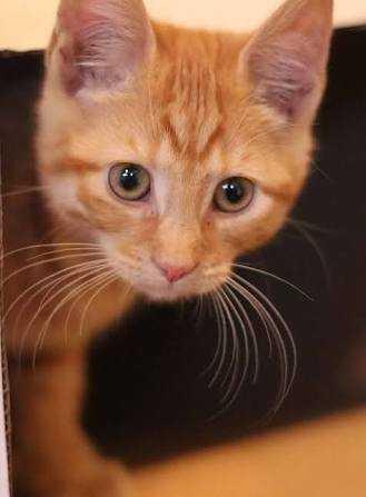 Gambar Kucing Orang godean.web.id