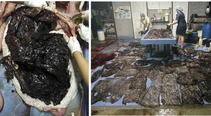 Plastik yang ditemukan dalam perut paus pilot yang terdampar di pesisir pantai Salokha Thailand (Foto: EPA & Reuters)