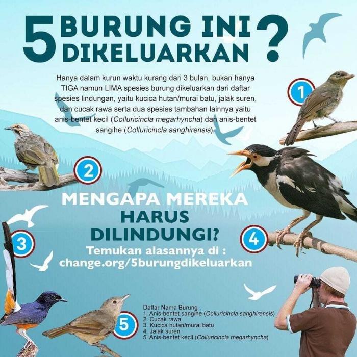 Lima burung yang dikeluarkan dari daftar dilindungi. Grafis dok. Profauna