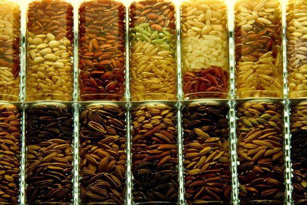 Sudah lebih dari 127.000 jenis padi yang disimpan di Bank Benih Padi IRRI. Sumber: IRRI