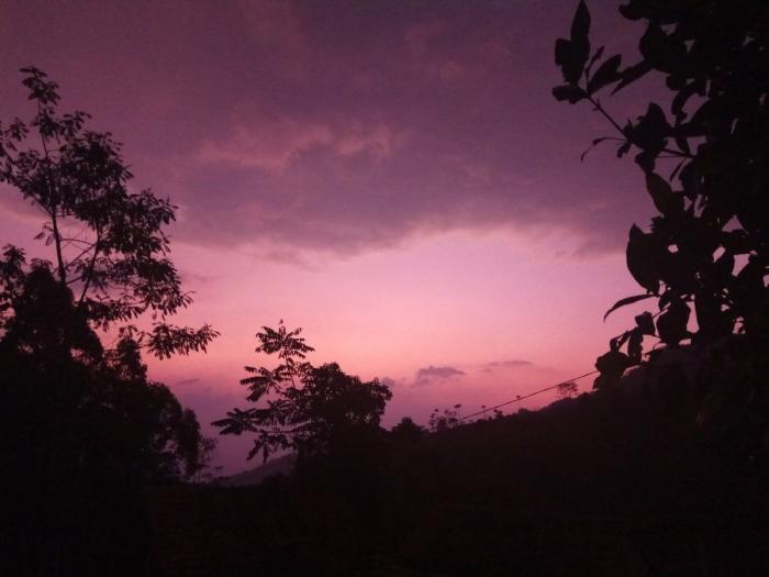 Sunset di Perkebunan Kopi di Desa Cinta