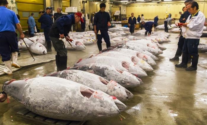 Ilustrasi: Perdagangan ikan dunia (Sumber: IntraFish)