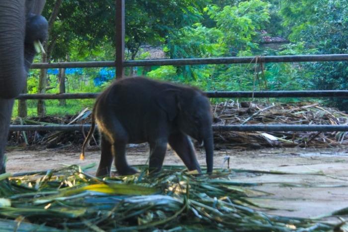 (Photo by ibadahmimpi.com)