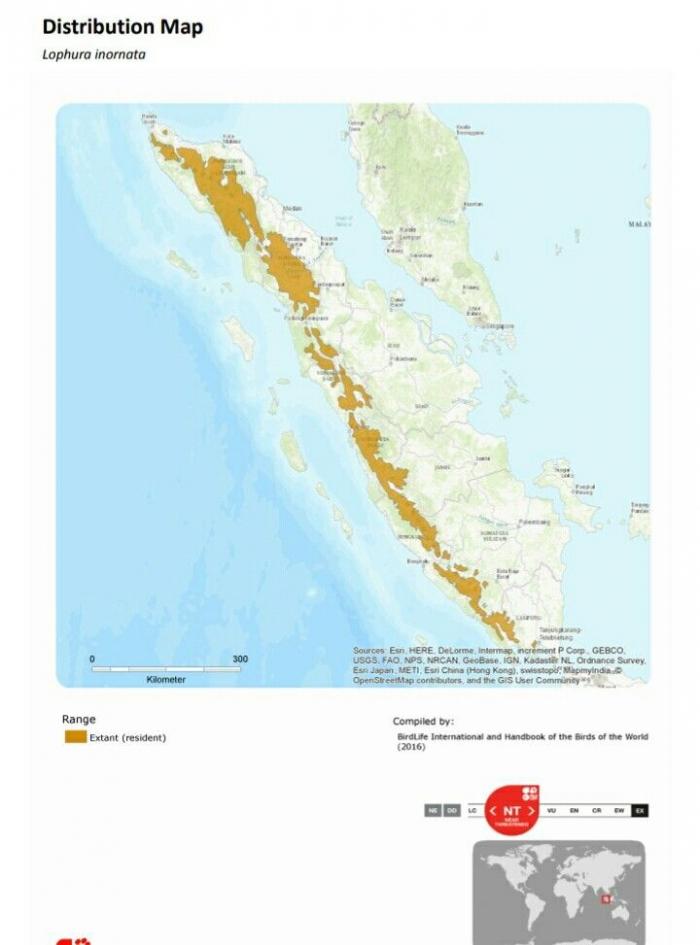 Distribusi habitat Sempidan Sumatra oleh IUCN. Sumber: IUCN Redlist