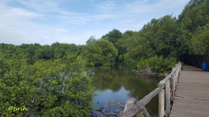 Harmoni ekosistem muara (dok pri)
