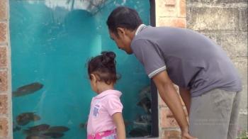 Wisata Gurami Seduri Surganya Pecinta Ikan Gurami Halaman