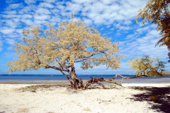 jzeqkdlxro1448761124-5c492d08c112fe145e10cb3e - Menemukan Kekayaan Tanah Air di Afrikanya Indonesia - paket wisata