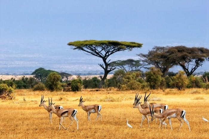 padang-savana-taman-nasional-baluran-situbondo-5c491c706ddcae280c53d3d7 - Menemukan Kekayaan Tanah Air di Afrikanya Indonesia - paket wisata