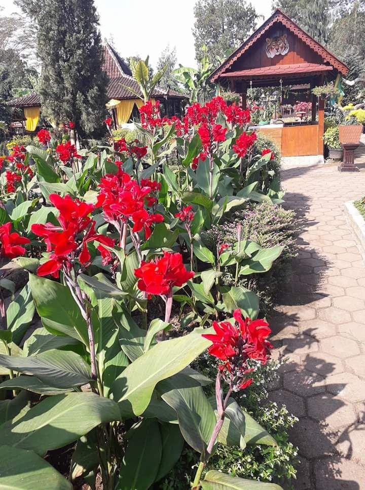 Wisata Kebun Bunga Begonia Lembang Bandung Halaman All Kompasiana Com