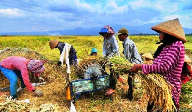 Di masa lalu, petani bahkan tak berani bermimpi bisa menyekolahkan anak-anak mereka - Foto: Industry.co.id