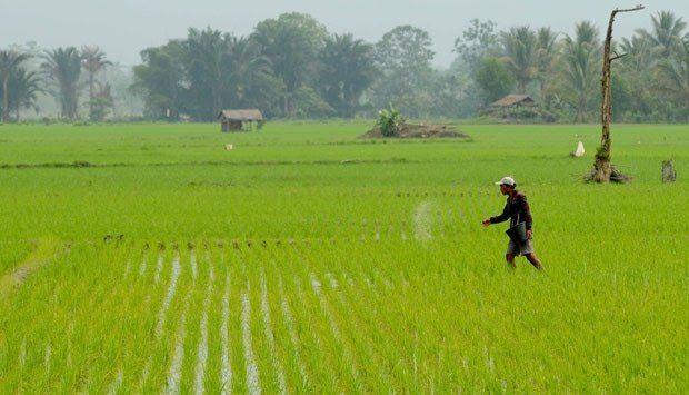 Pertanian (TEMPO/Fahmi Ali)