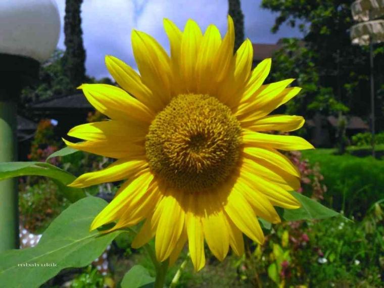 Kembang Kang Dadi Endahing Donya Bunga Yang Memperindah Dunia Kompasiana Com