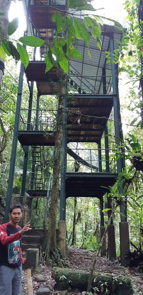 kanopi trail di Cikaniki, dokumen pribadi