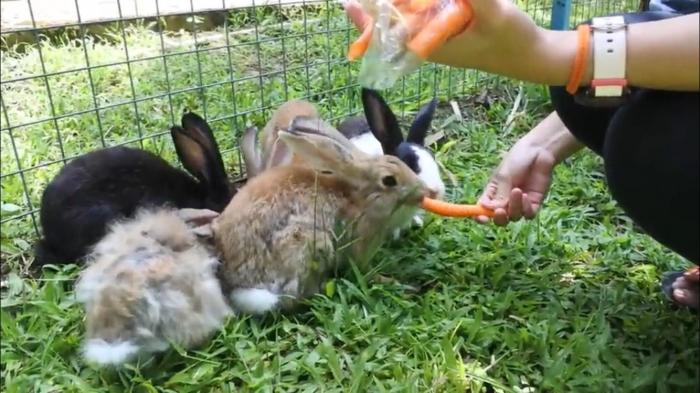 Pengunjung dapat memberi makan hewan secara langsung