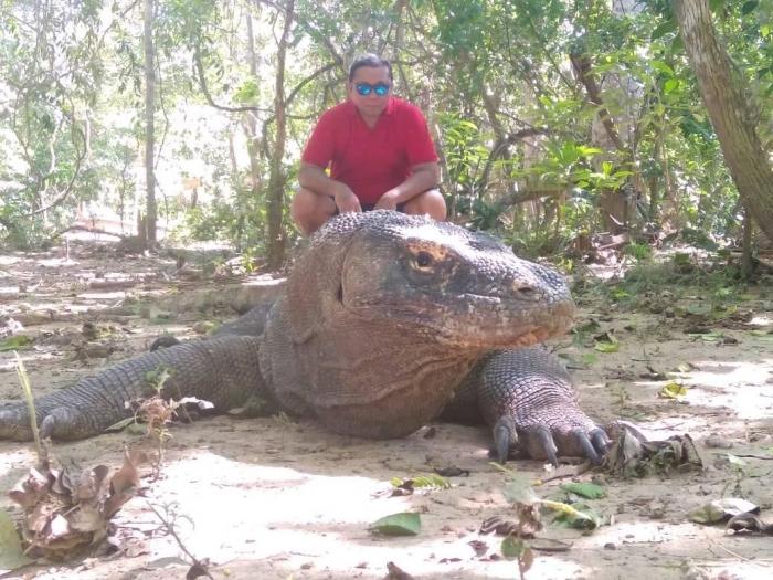 Komodo di Pulau Komodo (Dokumen Pribadi)