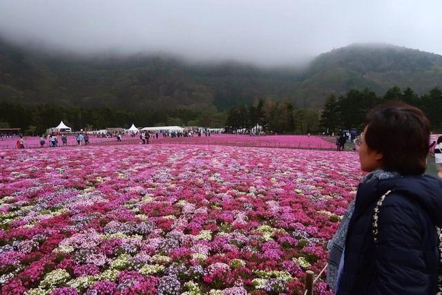 Pemandangan di Lokasi Shibazakura (dokpri)