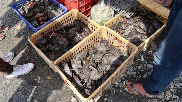 Kepiting, Banyak Dijual di Gorong-Gorong (Dokumen Pribadi)
