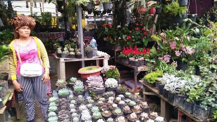 Ibu Tarigan Penjual Bunga di Pasar Buah Berastagi (dokpri)