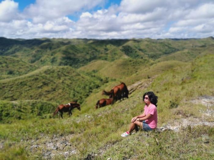Gerombolan kuda yang bebas merumput di Bukit Tanarara (dokpri)