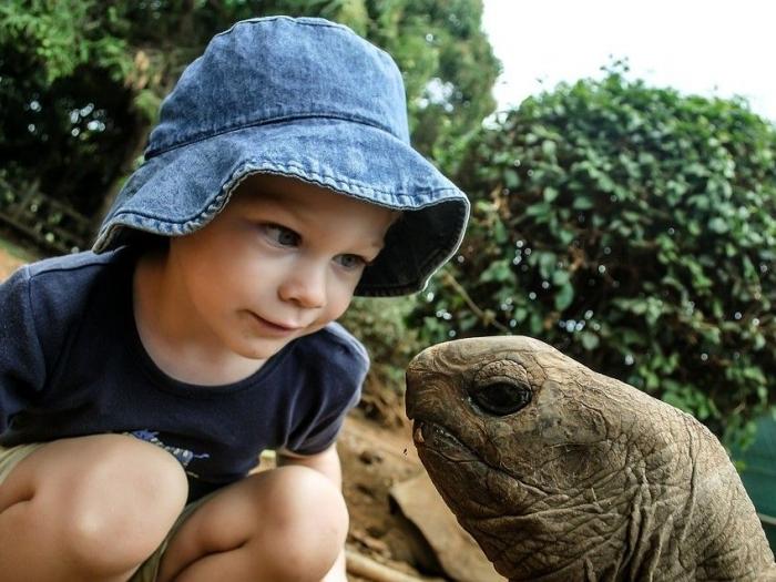 Ilustrasi Persahabatan Anak dan Kura-kura. Sumber Foto : https://pixabay.com