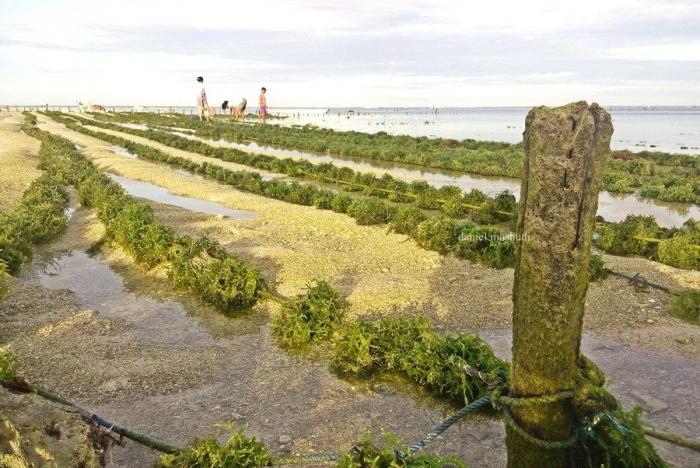 Budidaya rumput laut di Nemberala   Dokumentasi pribadi