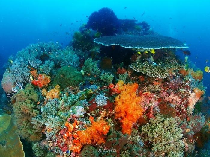 Crystal Rock - Menyelam dan Menikmati Alam Kepulauan Komodo   dokpri